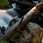 Thousand Falls Spring #3