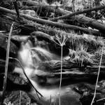 Thousand Falls Spring #4