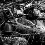 Thousand Falls Spring #5