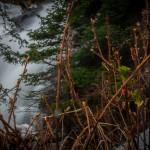 Fern Falls Spring #10