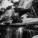Fern Falls Spring #2