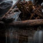 Fern Falls Spring #6