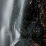 Fern Falls Spring #8