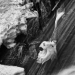 Fern Falls Spring #9