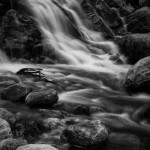 Horseshoe Falls Spring #4