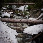 Lyric Falls Spring #1