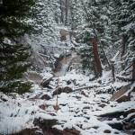 West Creek Falls Spring #1
