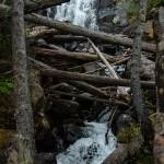 Fern Falls Summer #2