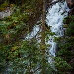 Fern Falls Summer #7