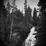Fern Falls Summer #8