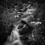 Marguerite Summer #5
